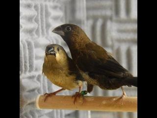 Birdsong is like jazz