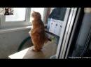 Забавные животные.Смешное видео про животных.Приколы с животными.