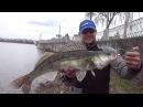 AZOZA 25 03 17 Тернопіль Переднерестовий судак Роман ділиться враженнями від рибал