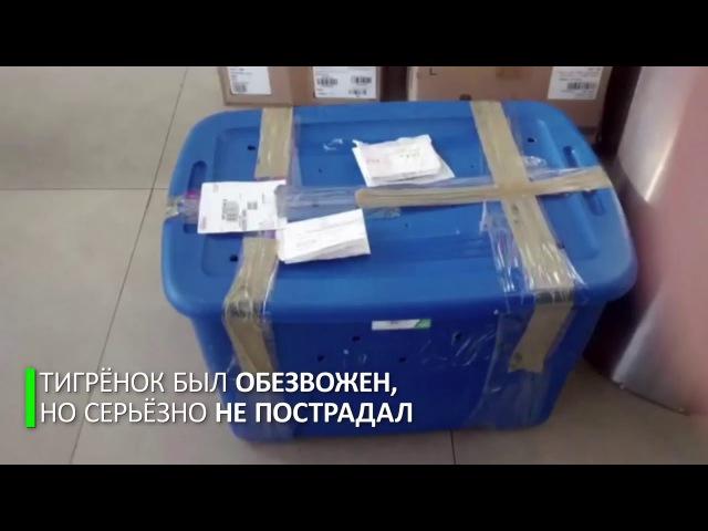 Собака ищейка спасла тигрёнка из почтового контейнера