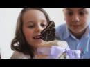 Домашняя ферма бабочек от Fly