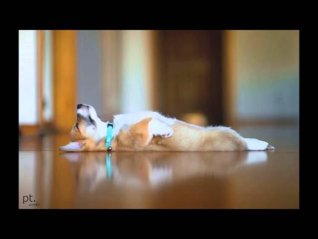 Relaxing Opera playlist to unwind fall asleep