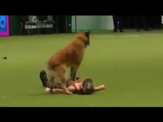 British army dog (1)