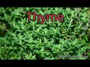 Thyme and Thyme Tea Benefits for Health Hair and Skin One of Nature's Top Antioxidant Herbs