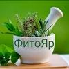ФитоЯр. Лекарственные травы в Ярославле.