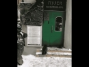 Кот Бармаглот идет на работу ему около 12 лет и он работает котом Бегемотом в музее Булгакова