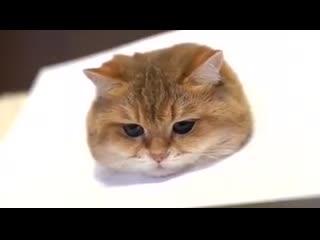 Как нарисовать живого котика