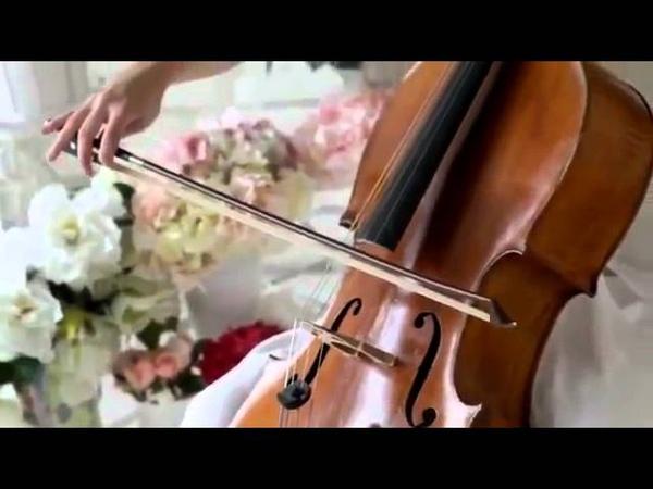 Струнный квартет на свадебное торжество в Клину Солнечногорске