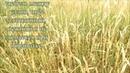 Заготовка соломки для декоративных работ. Пшеница и овес в поле. Первое знакомство с материалом