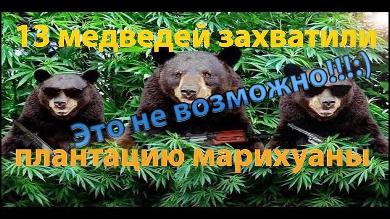 Видео медведи и конопля клонирование конопли