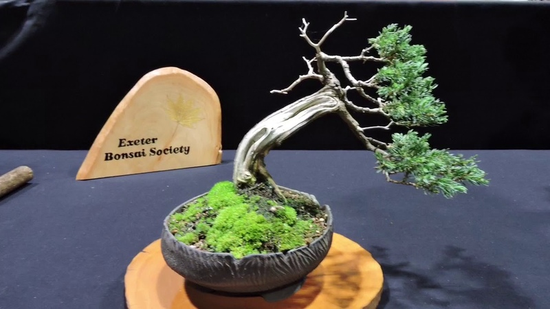 10th Heathrow Bonsai Show 2019 Part 1