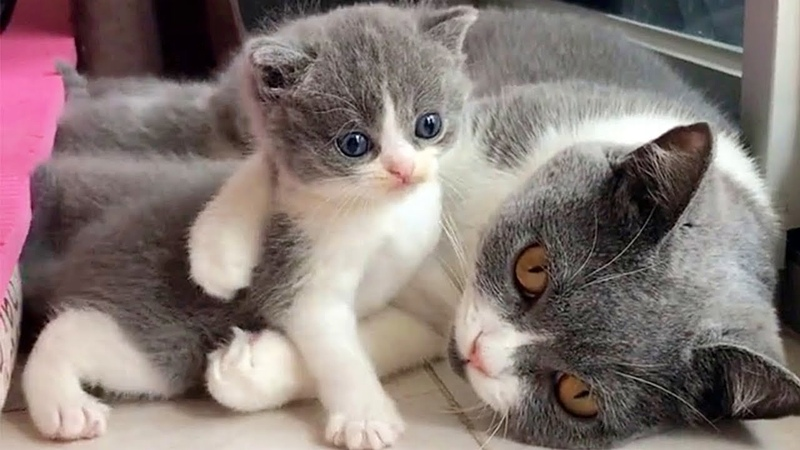 Baby Kitten Doesn't Want a Bath From Mama