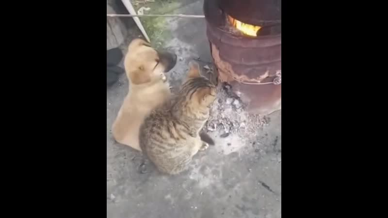 кот и пёс-1 (1)зв-костёр - машина времени🎶🎶🎶