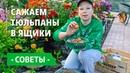 Как посадить тюльпаны осенью Удобная корзина для луковичных! Правильная посадка тюльпанов