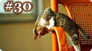 Смешные Кошки 2017! (#30) Веселая Видео Подборка! Смешные Животные 2017/