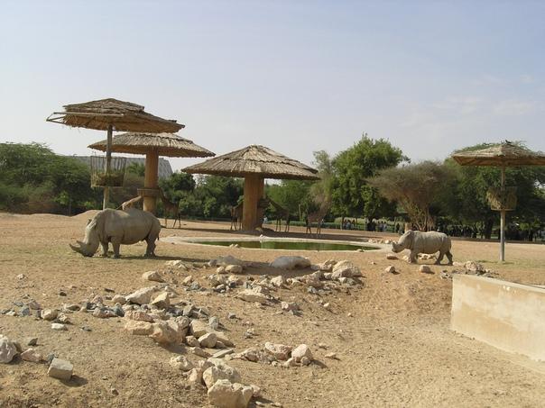 Ильдар Каримов: Зоопарк Аль-Айна (ОАЭ)
