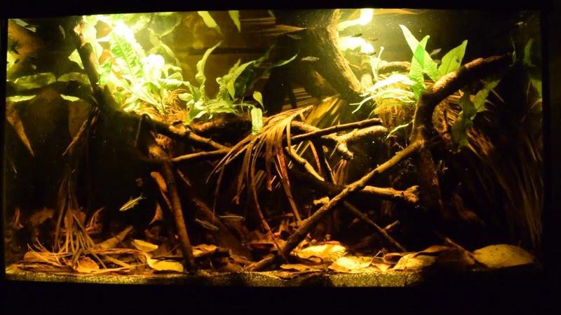 Small creek/peat swamp Upper Kapuas river basin, 110 L