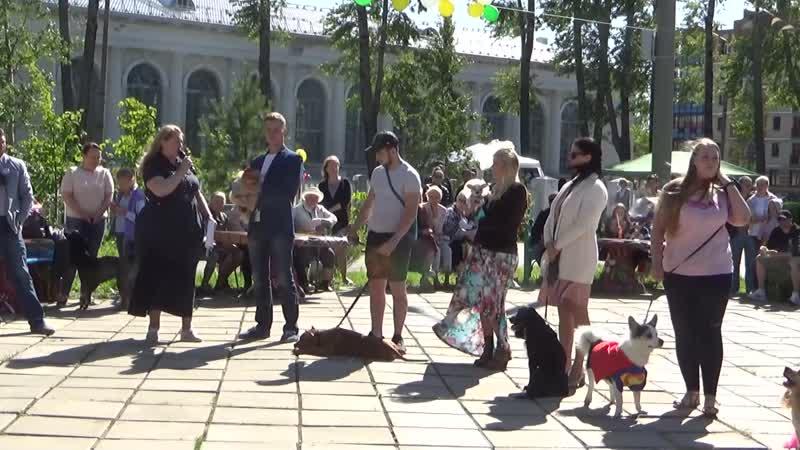 Конкурс собак 2019 День города Северодвинск