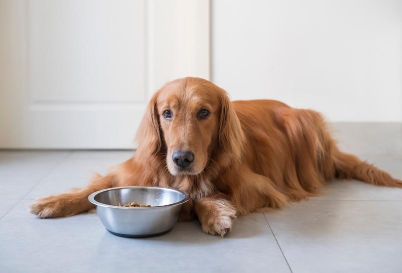 Как перевести собаку на готовый корм?, изображение №2