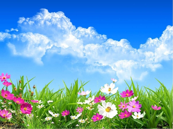 spring wallpaper backgrounds - HD 1920×1200