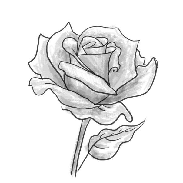 drawings of roses - 960×960