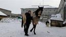 Способ обучения лошади команде дыбы свечка песада