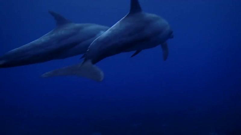 Спящие дельфины Animal Planet