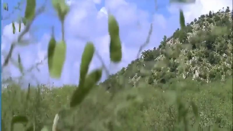 Shahrukh Khan Amrish Puri clip movies Koyla
