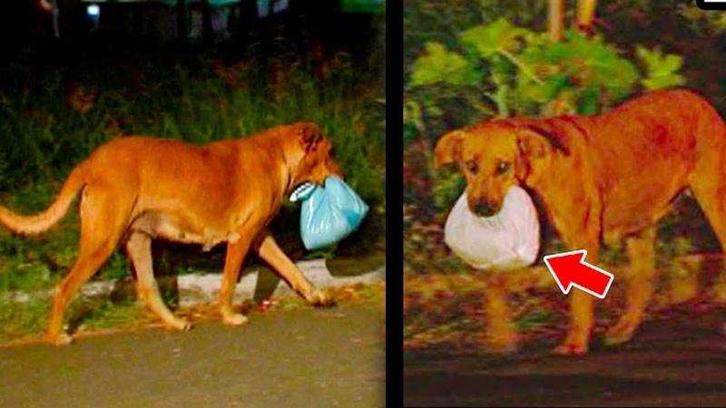 Каждый вечер собака выносила еду кому то хозяйка была шокирована узнав правду