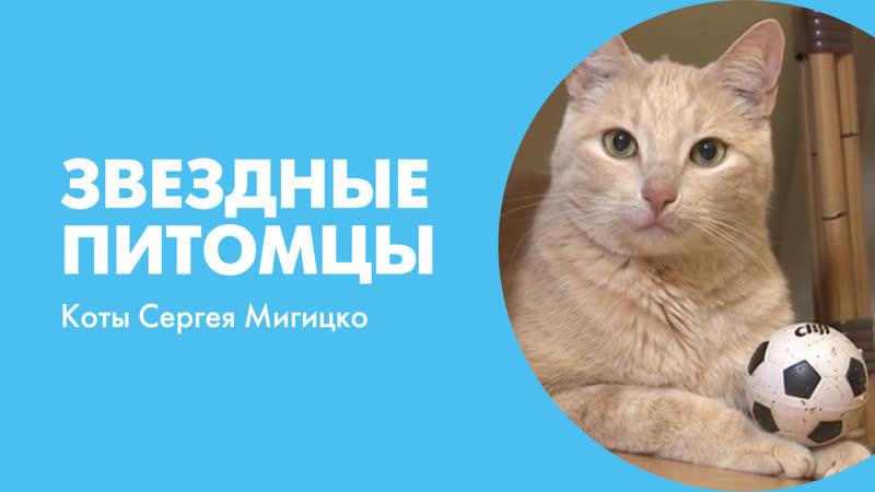 Звездные питомцы. Коты Сергея Мигицко