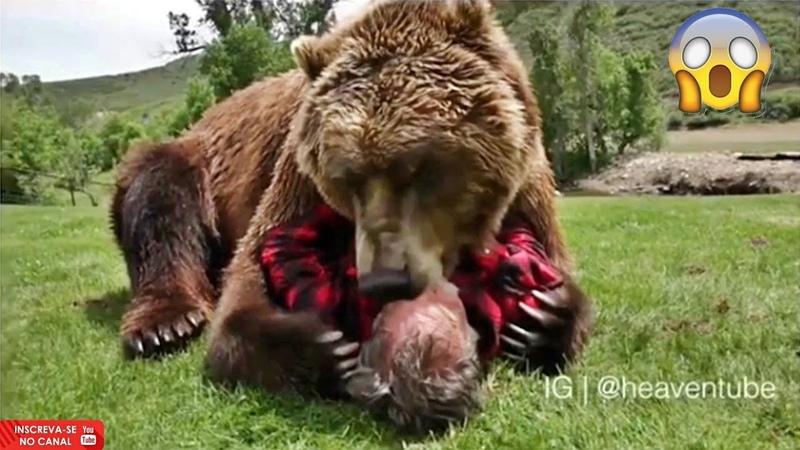 Os animais não tem sentimentos Será mesmo?? Who says they have no feeling
