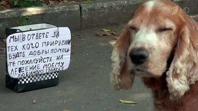 Волонтеры изоозащитники разоблачают мошенников использующих животных для попрошайничества Новости Первый канал