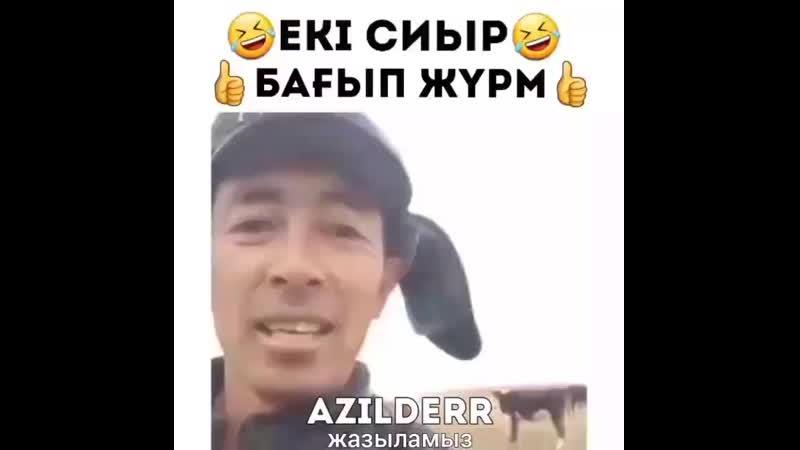 Екі сиыр