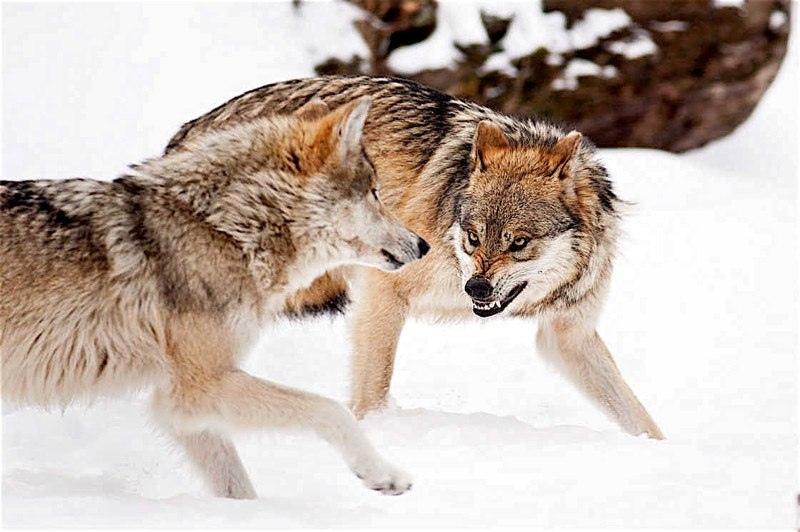 Красота дикой природы, изображение №2