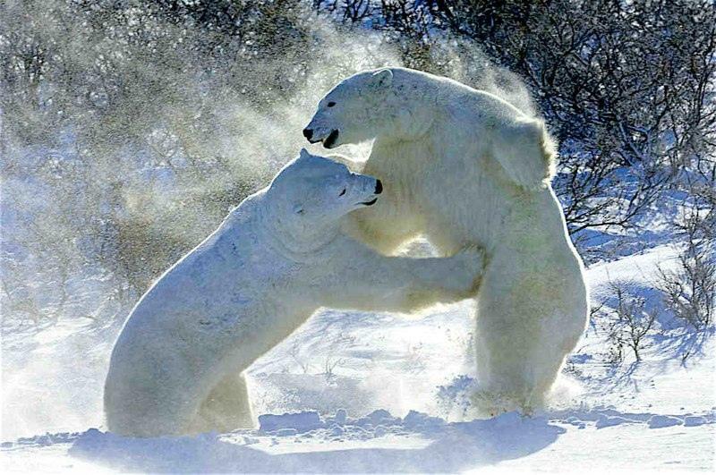 Красота дикой природы, изображение №18