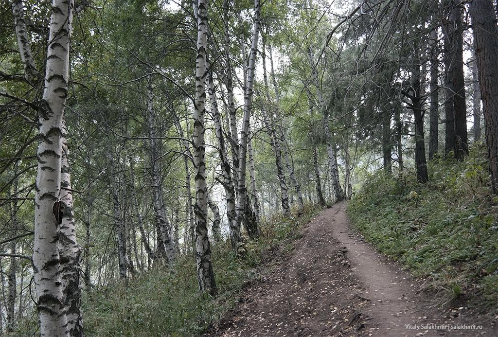 Березы по дороге на Кок-Жайляу, маршрут 2019