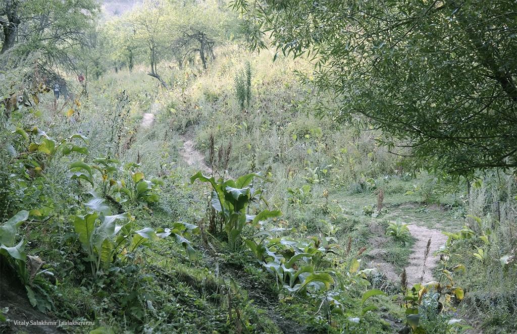 Легкая тропа на Кок-Жайляу, маршрут 2019