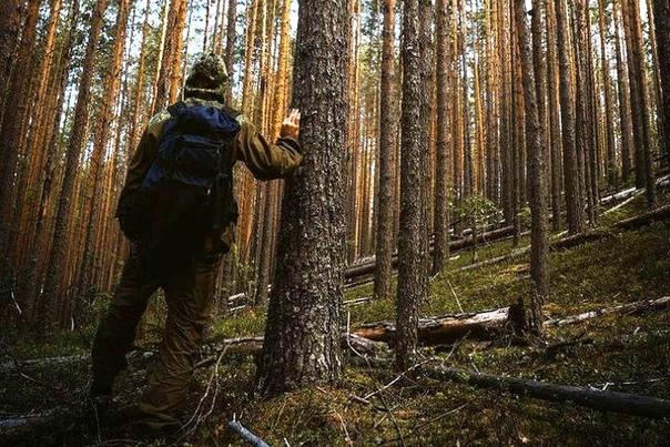 Однажды Вася с двумя старшими братьями поехали к бабке в посёлок Была осень и они рано утром собрались в лес за грибами. Лес был в километре от посёлка, за горкой странной формы. Местные