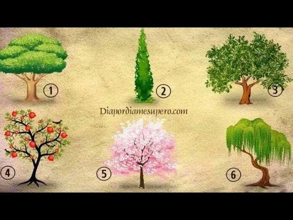 Tes Kepribadian Pilih Satu Pohon yang Kamu Tanam Hasilnya Ungkap Kesuksesanmu