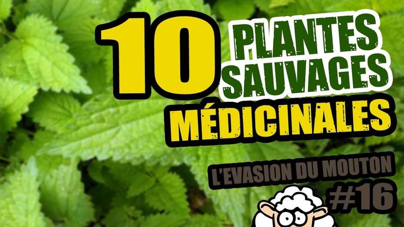 10 PLANTES SAUVAGES COMESTIBLES (ft Youtubers autonomistes) - L'évasion du Mouton 16