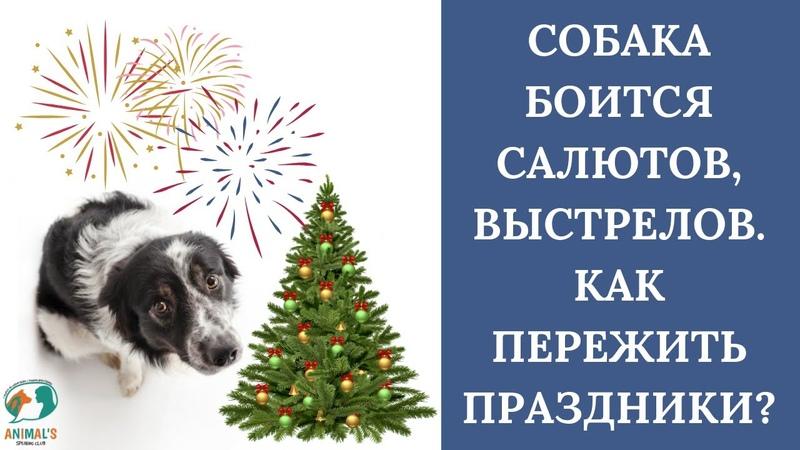🐶🎄 Собака боится салютов Собака боится выстрелов Что делать 🐶