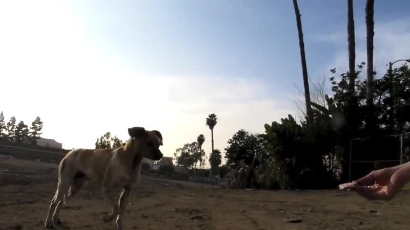 NEW ENDING An Abused street dogs second chance Ralphs rescue and rehab