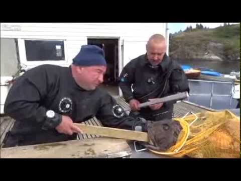 FULL Russian Diver's Agony After Monkfish Bites Hand