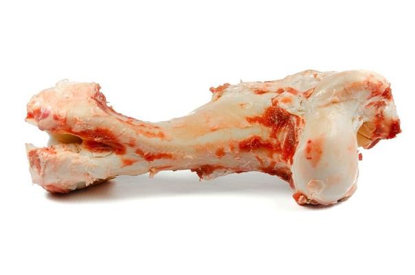 Как выглядит сахарная кость фото