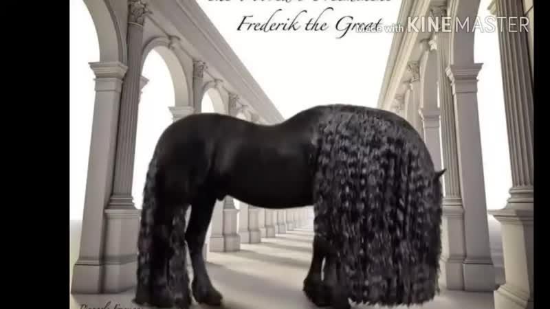 Самый красивый представитель фризской породы мира