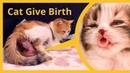 Кошка родила 5 котят с совершенно разным окрасом