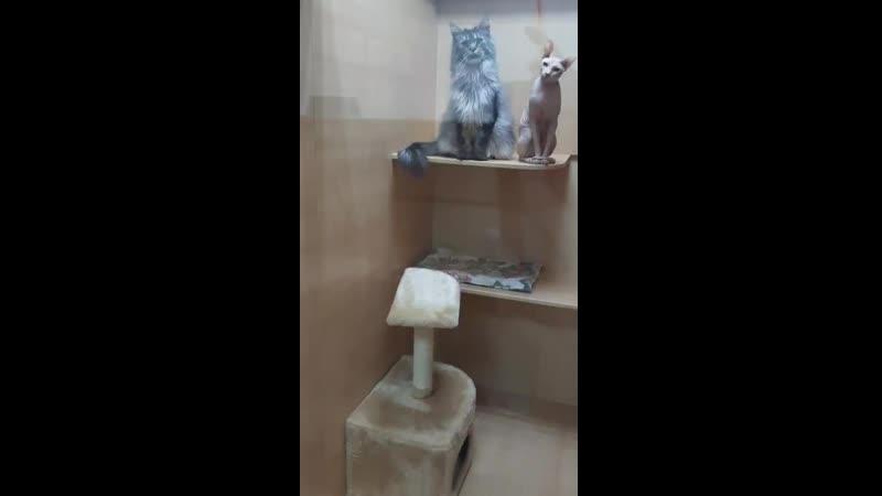 Гостиница для кошек Зева и Пася
