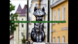 Зеленоградск - город котов и велосипедов