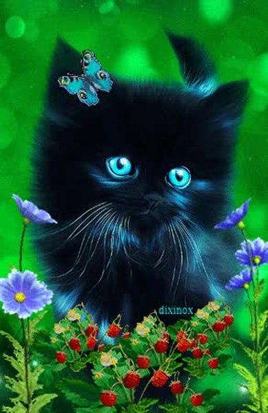 фишка двора, картинки кошек анимашки на телефон покорил