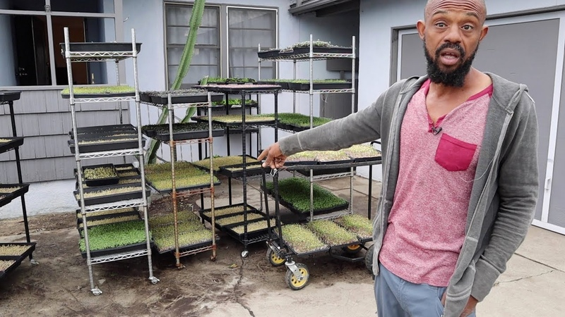 The Most DIY Microgreen Operation I've Ever Seen